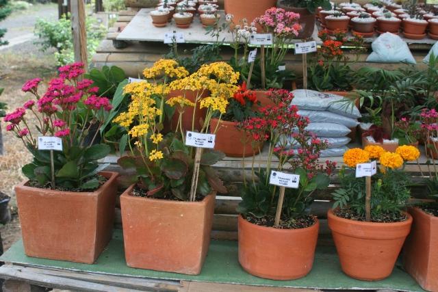 Venta plantas ornamentales encuentra mercado en puerto for Vendo plantas ornamentales